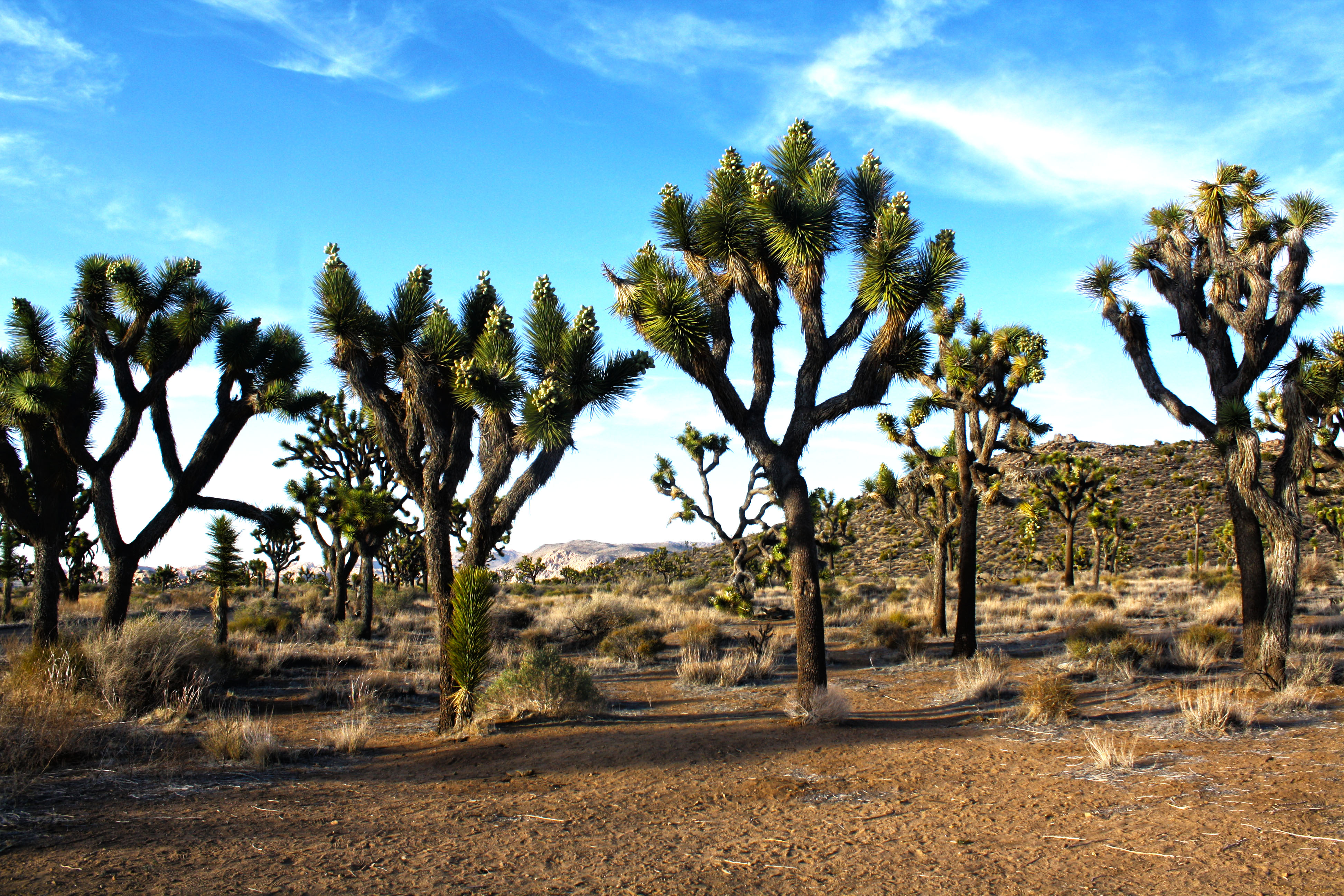 Day 16: Joshua Tree National Park, Yucca Valley – Cool ...