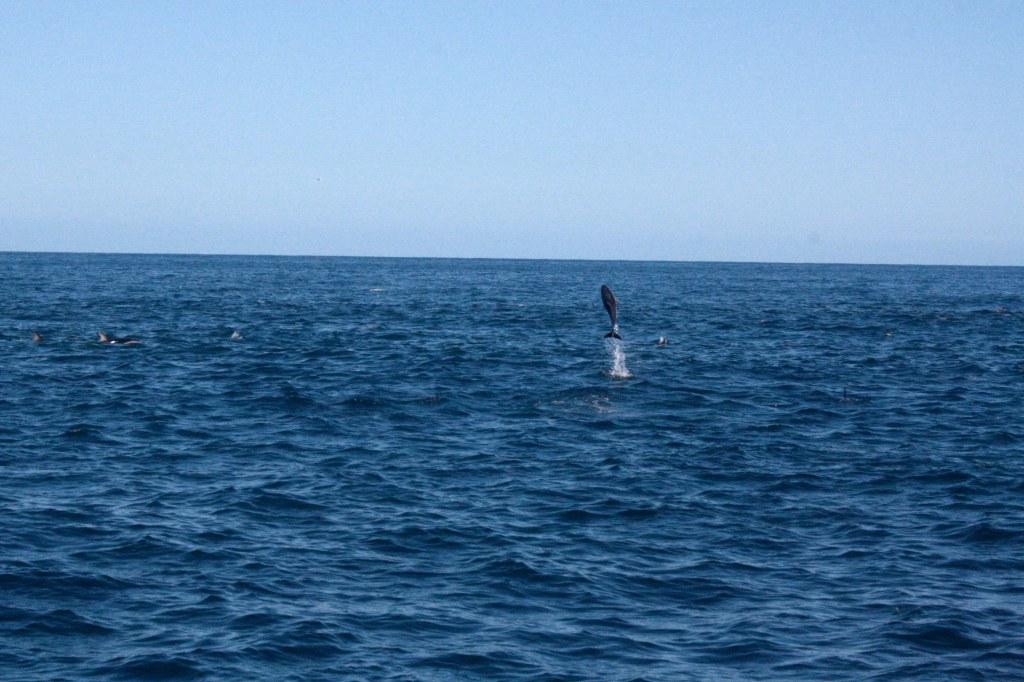 Kaikoura Dolphin Swim Dolphin Encounter Kaikoura